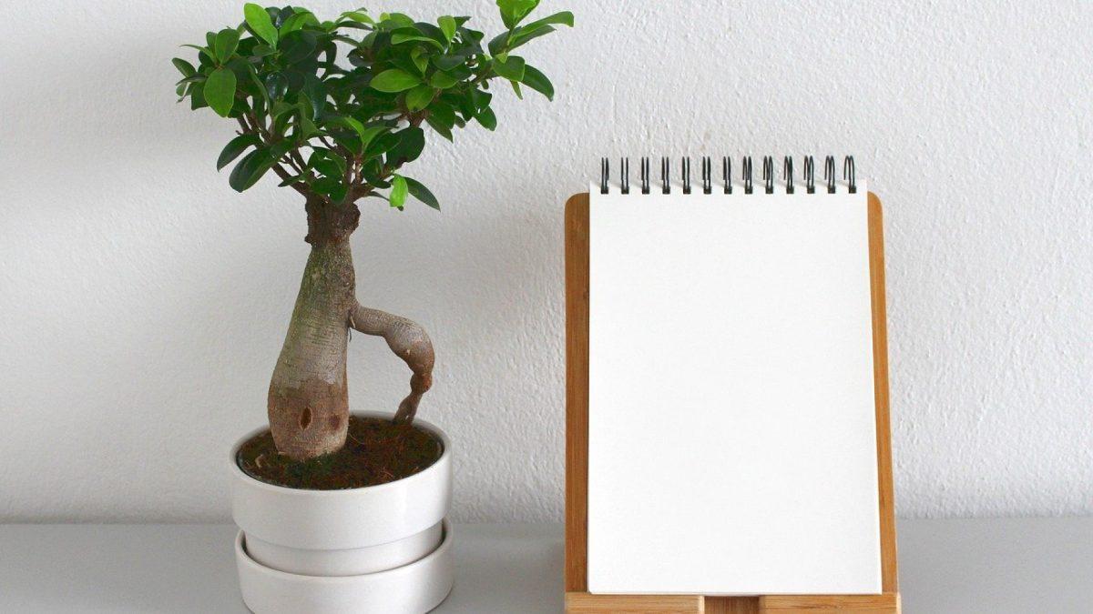Offrir un bonsaï, le cadeau idéal pour les amoureux de la nature